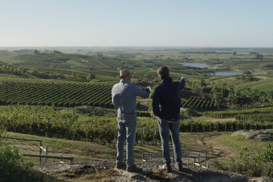 bodega garzon vineyards